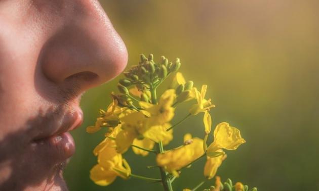 Anosmia: sintomi, cause e cura per la perdita dell'olfatto