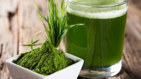 Alga Spirulina: proprietà e benefici