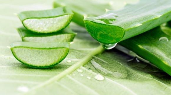 Aloe vera: ecco cosa accade al corpo quando si consuma il suo succo