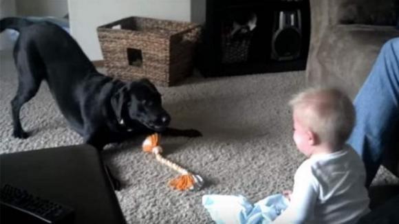 Il cane tenta in ogni modo di far divertire il bambino. La reazione del piccolo è sorprendente!