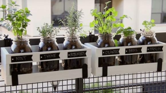 Come coltivare le erbe aromatiche in casa in modo pratico ed originale