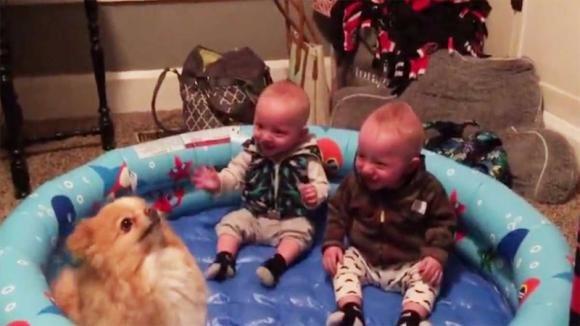 Mettono i due gemelli ed un cagnolino in una piscina gonfiabile e si divertono da matti!