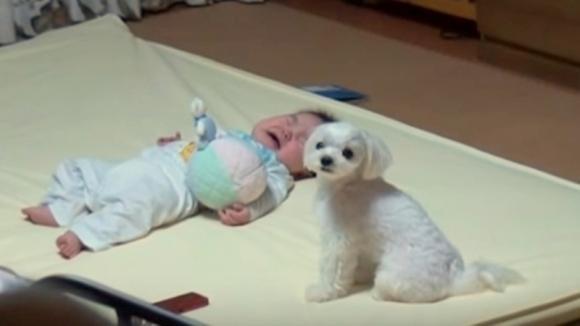 Un neonato inizia a piangere. Ecco cosa fa il cane per tenere la situazione sotto controllo