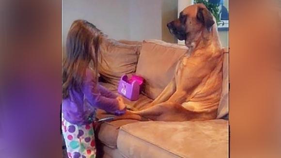 La mamma nota il cane seduto sul divano. Poi scopre cosa fa sua figlia e riprende tutta la scena!