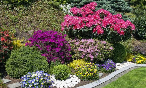 Piante Da Giardino Resistenti Al Sole Ecco Quali Sono Le Migliori