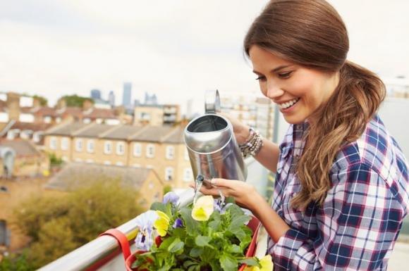 Cocciniglia: come eliminarla dalle piante in casa