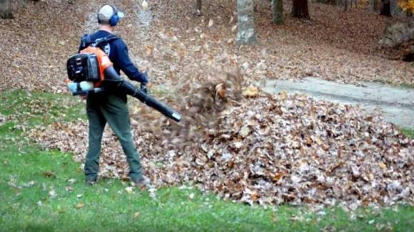 Sta soffiando via le foglie secche e si spaventa a morte: ecco cosa si nascondeva sotto il mucchio
