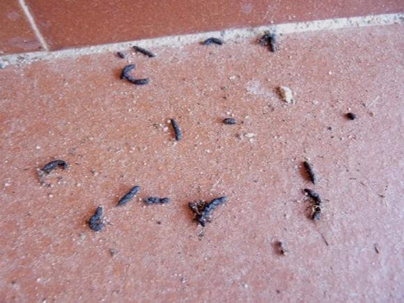 Cacca di topo in casa: come riconoscerla e alcuni rimedi per allontanare i roditori