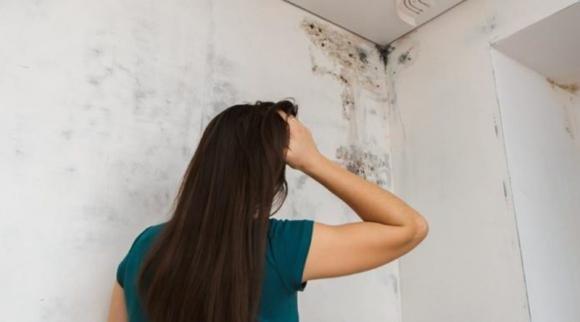 Muffa sui muri: come eliminarla e le tecniche per prevenirla