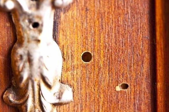 Differenze tra tarme e tarli del legno e come eliminarli in modo naturale