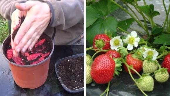 Taglia delle fragole a fette e le mette in un vaso: un'idea da provare assolutamente!