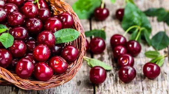 Proprietà e benefici di ciliegie, amarene, marasche, visciole e duroni