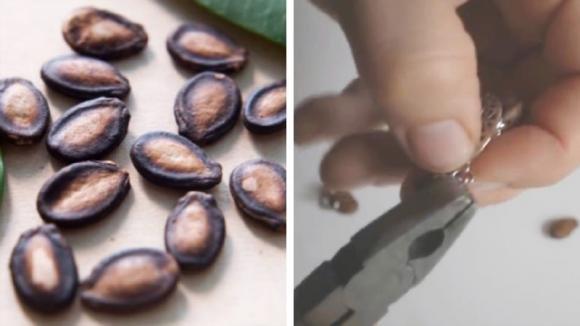 Non buttate via i semi dell'anguria: ecco un'idea per riciclarli in modo creativo