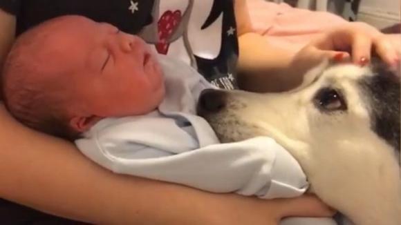 Mostra il suo bambino al cane per la prima volta: la reazione dell'animale è emozionante
