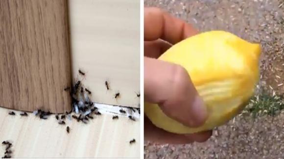 Formiche in giardino o in casa: i rimedi naturali per eliminarle del tutto