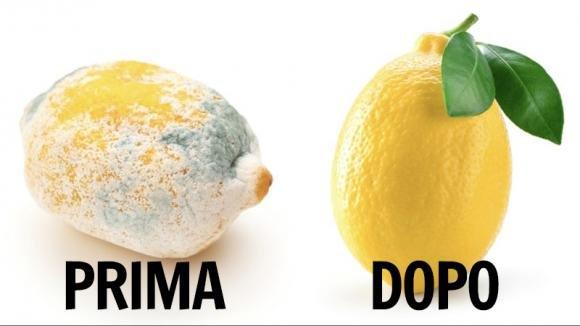 Come conservare i limoni più a lungo: un trucchetto semplice ed efficace