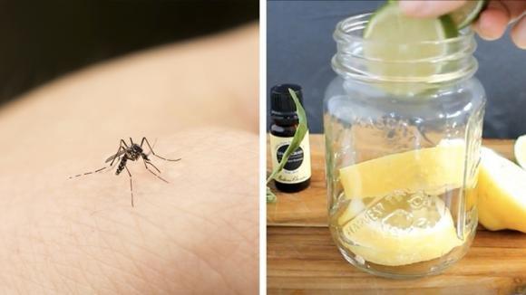 Come tenere le zanzare alla larga: un rimedio naturale semplice ed efficace