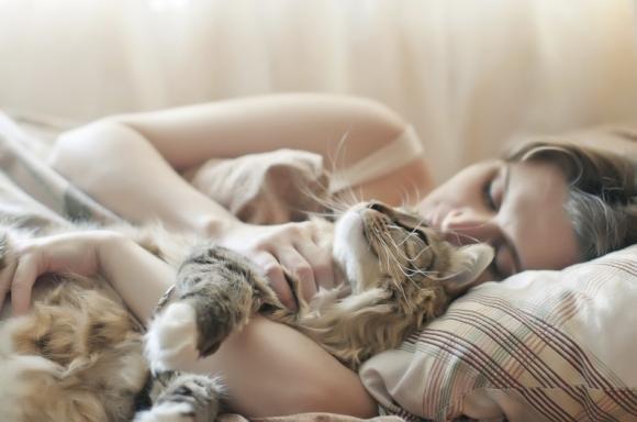 Sognare gatti: significato e come interpretare il sogno