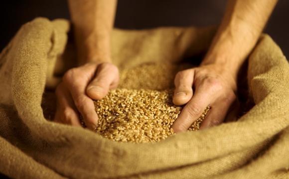 Muscolo di grano: cos'è, le proprietà e i valori nutrizionali