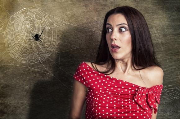 Sognare ragni e ragnatele: significato del sogno