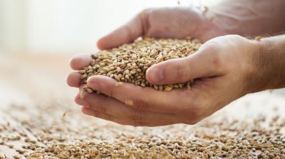 I cereali meno conosciuti: orzo, segale e miglio. Cosa sono e come utilizzarli