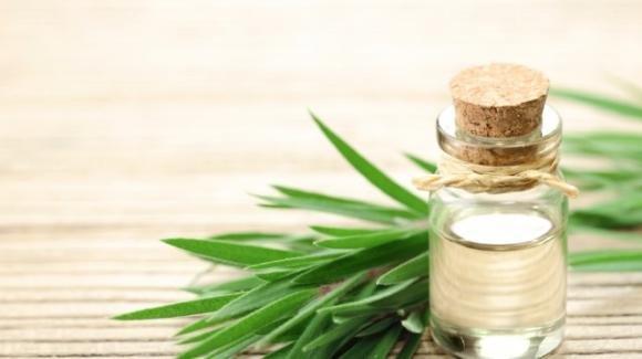 Olio essenziale di tea tree: come utilizzarlo