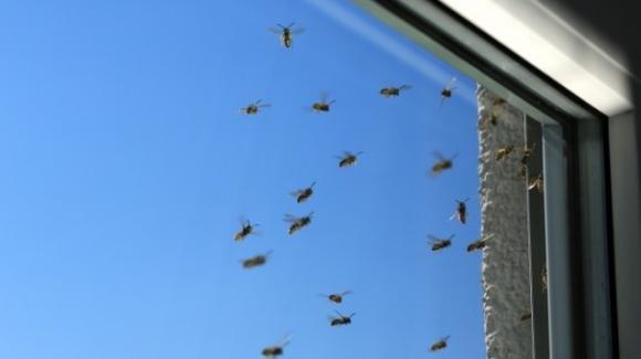 Rimedi naturali per allontanare le vespe e le api dalla vostra casa e dal vostro giardino
