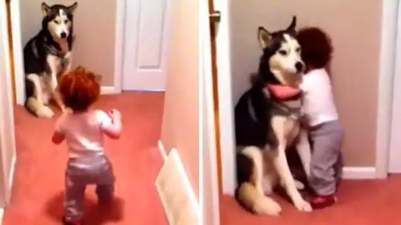Il papà accende l'aspirapolvere: il piccolo si spaventa e corre a rifugiarsi dal suo cane