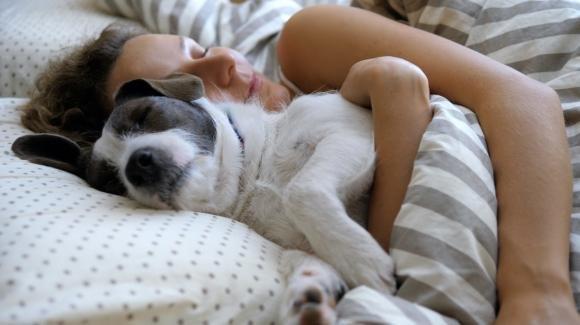 Sognare cani: vari significati e smorfia per il Lotto
