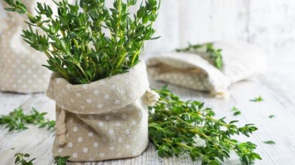 Le migliori erbe per respirare meglio: 5 piante per il benessere dell'apparato respiratorio