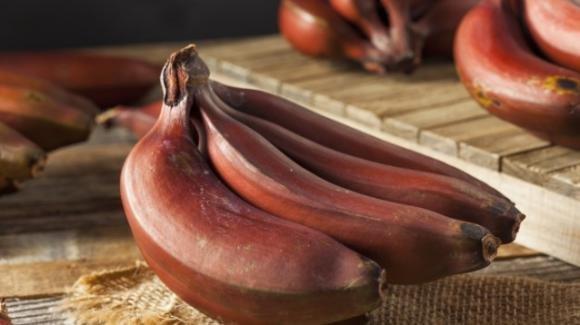 Banane rosse: l'alimento consigliato per migliorare il sistema immunitario