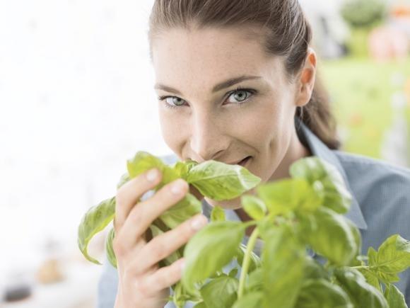 Basilico: proprietà, come conservarlo e come coltivarlo in casa