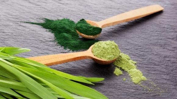 Alga spirulina: proprietà, utilizzo e controindicazioni