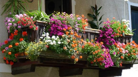 Balcone fiorito in autunno, 10 piante adatte