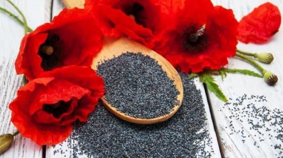 Semi di papavero: proprietà, utilizzi e controindicazioni