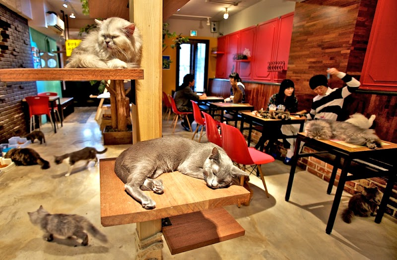 Per gli amanti dei gatti: nasce il Neko Cafè a Torino
