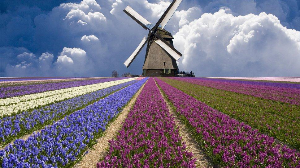 Primavera in Olanda tra tulipani e mulini a vento