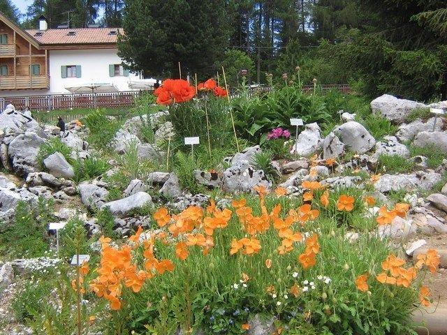 """Giardino Alpino """"Le Viotte"""" di Monte Bondone a Trento"""