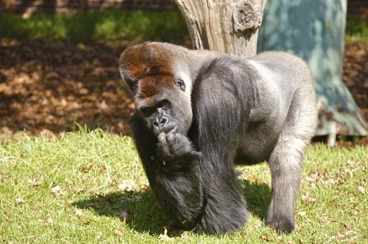 Zoo di Johannesburg