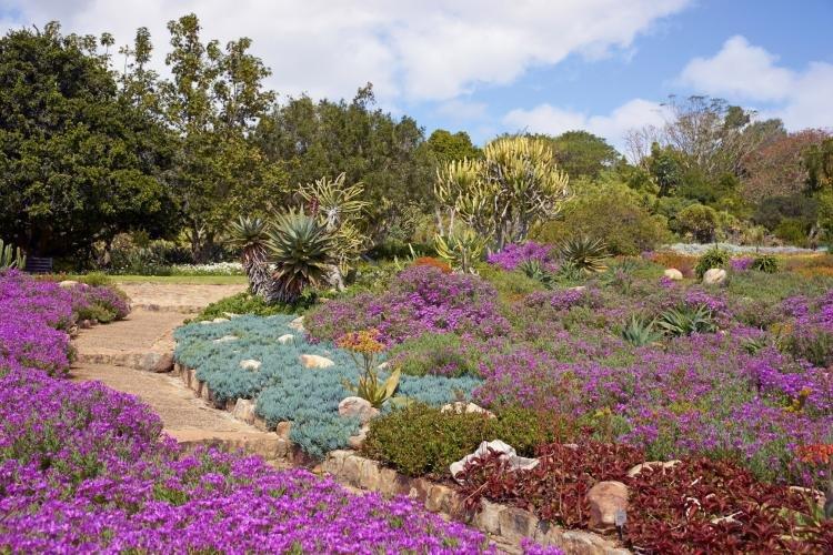Giardino Botanico Nazionale di Kirstenbosch a Città del Capo