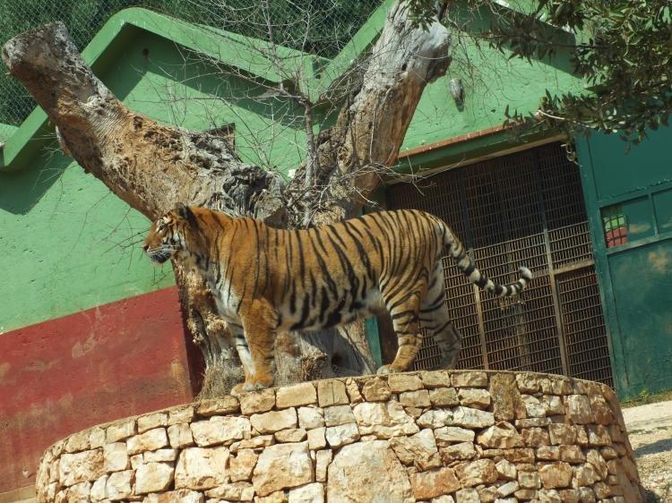 Lo Zoo-safari Fasanolandia di Fasano