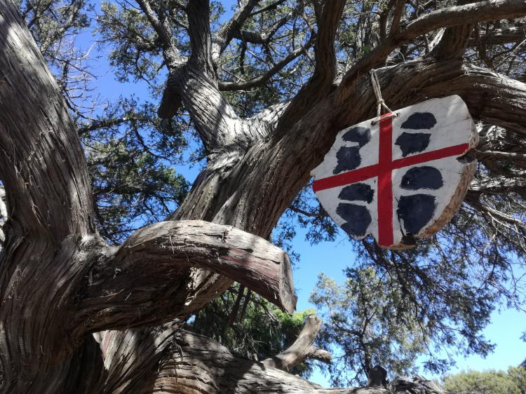 Sardegna selvaggia: L'albero del Poeta