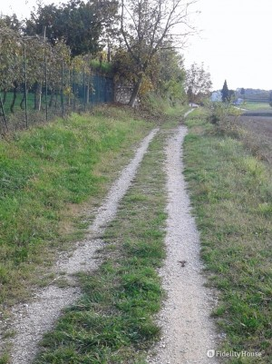 Uno dei tanti sentieri a Peschiera del Garda