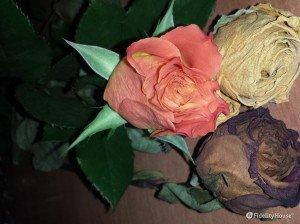 Fiori secchi: un'ottima decorazione