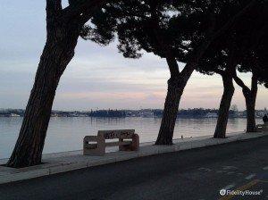 Alberi di pino sul Lago di Garda