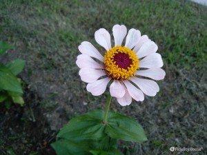 Particolare fiore simile ad una margherita