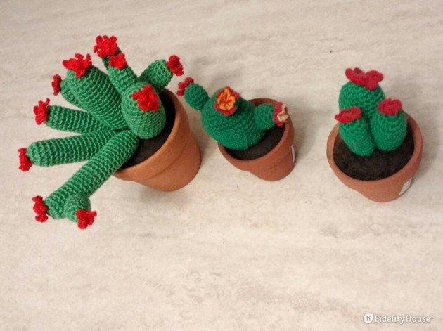 Cactus a uncinetto Spiegazioni in italiano. | 471x630