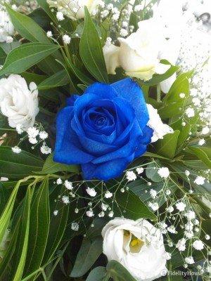 Una rosa blu stupenda
