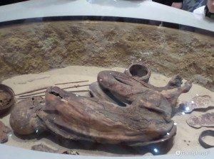 Mummia in posizione fetale – Museo Egizio, Torino