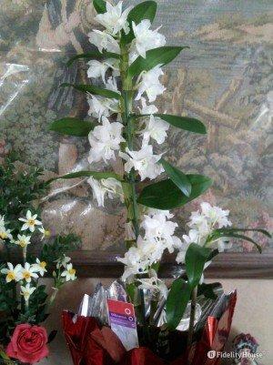 L'orchidea e altri fiori